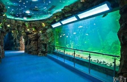 "In the shopping center ""Arena"" an oceanarium will be opened"