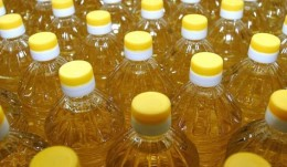 In the Altai region is 1.6 times increased the production of vegetable oil