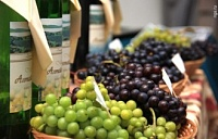 French offered to develop wine tourism in Altai