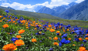 Tour operators of Russia and China appreciated the hospitality and the nature of Altai Krai
