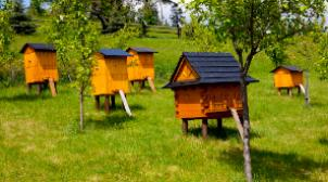 Altai beekeepers will receive 2 million rubles of state support